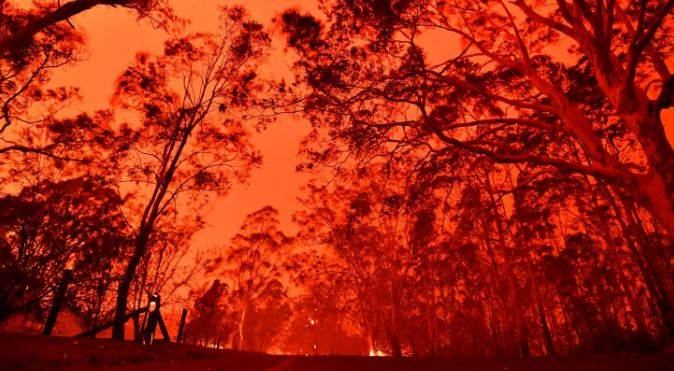 Australian Bushfires Issue : How We Are Destroying Our Own Forests!