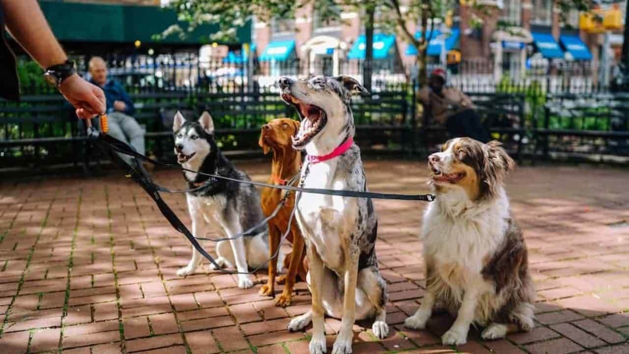 If you love Dogs check out these few cities which are most furry friendly