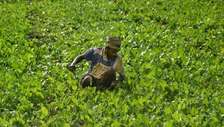 Ray of Hope in Agriculture Sector During COVID-19 Pandemic