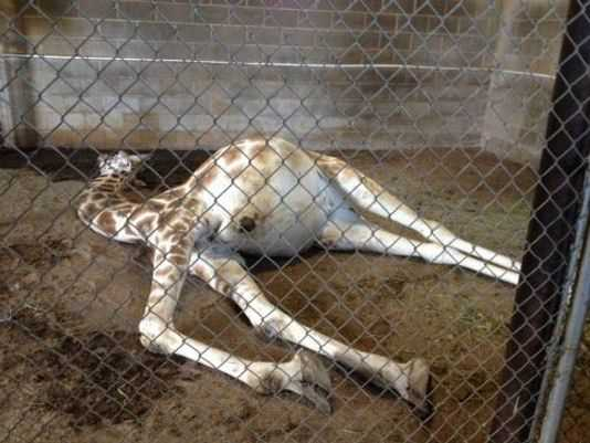 Zoos: Prisons for Beings Who have Never Committed a Crime