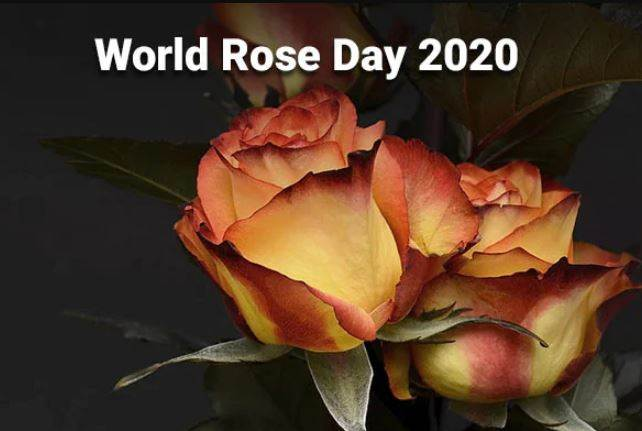 Essence Of World Rose Day