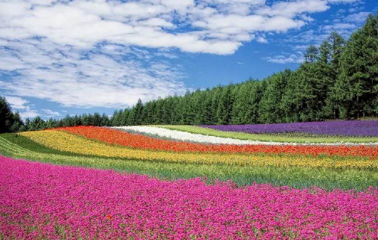 OMG! Flower Colors Are Changing Thanks To Climate Change