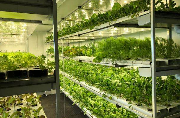 Hydroponic Farming Is Key To Grow Vegetables Fast
